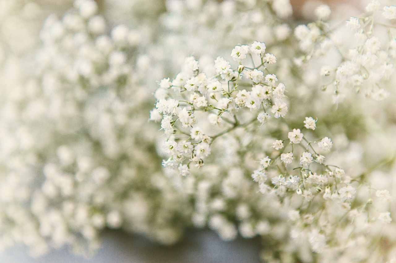 Baby's Breath Meaning Flower