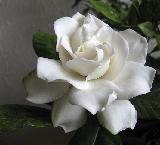 top  most popular wedding flowers  nyc wedding blog  ny, Natural flower
