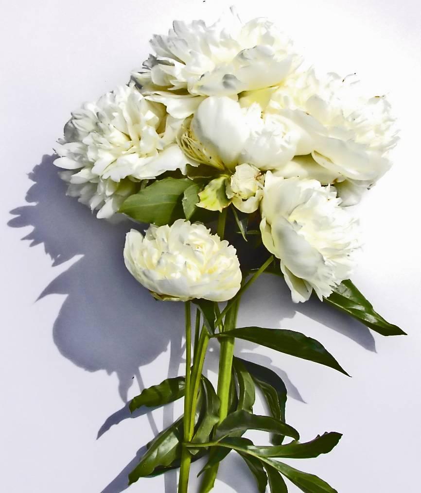 Top 10 Wedding Flowers: Top 15 Most Popular Wedding Flowers